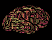 איך לומדים לדבר אנגלית? - הרבה מילים באנגלית שיוצרות יחד תמונה של מוח